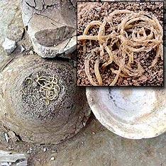 Изображение древней китайской лапши