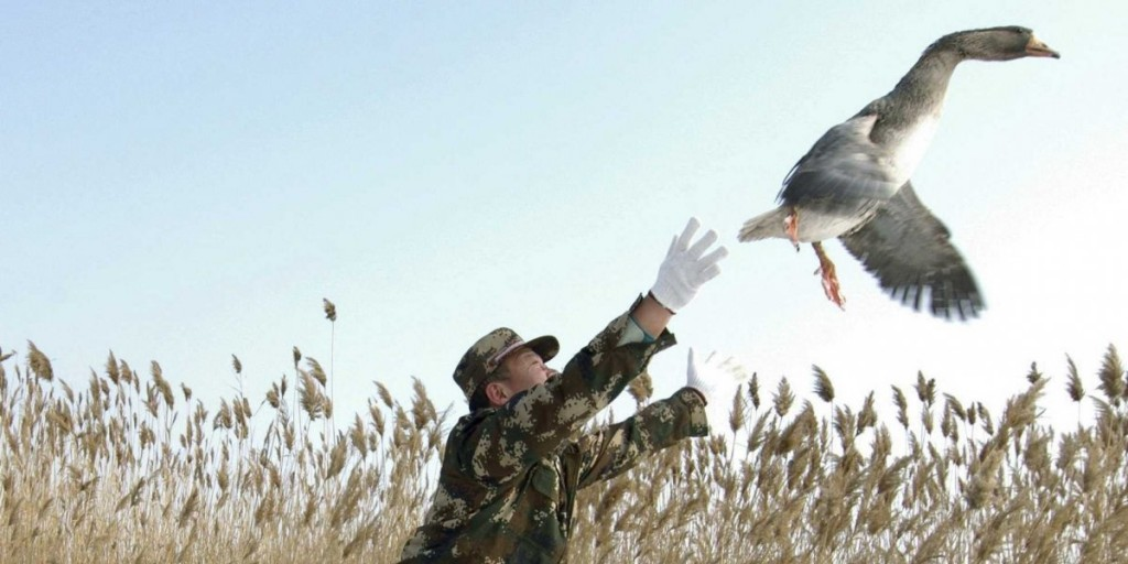 Военный полицейский выпускает дикого гуся на волю. Источник - REUTERS/China Daily