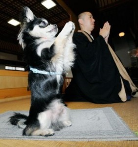 Собака подражает своему хозяином и повторяет за ним