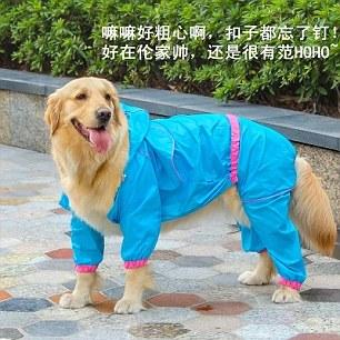 Дождевик для собак. Таобао