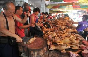 Фестиваль собачьего мяса. Источник - sinocom.ru