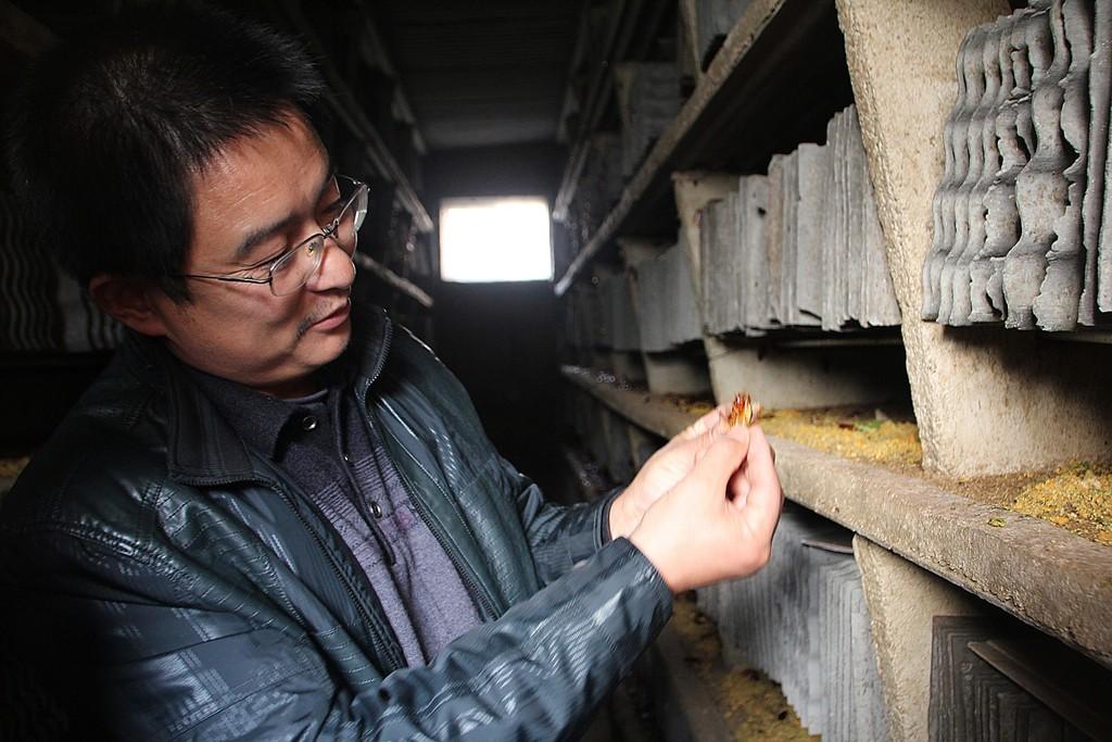 Владелец фермы Ван Фу-Мин демонстрирует достижения