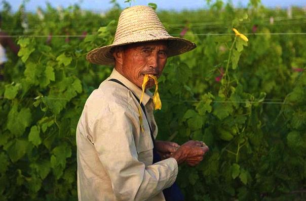 Китайцы спешно заключают торговые договоры с иностранными заказчиками. Источник: www.thedrinksbusiness.com