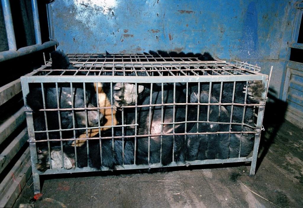 Медведь в клетке на ферме