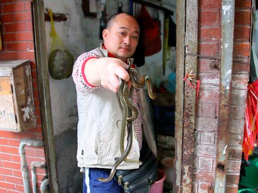 Продавец змей демонстрирует свой товар на рынке в Гуанчжоу