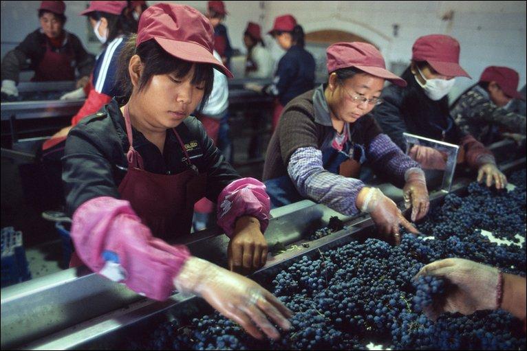 Продвижением виноделия занялись власти Китая. Источник: news.bbc.co.uk