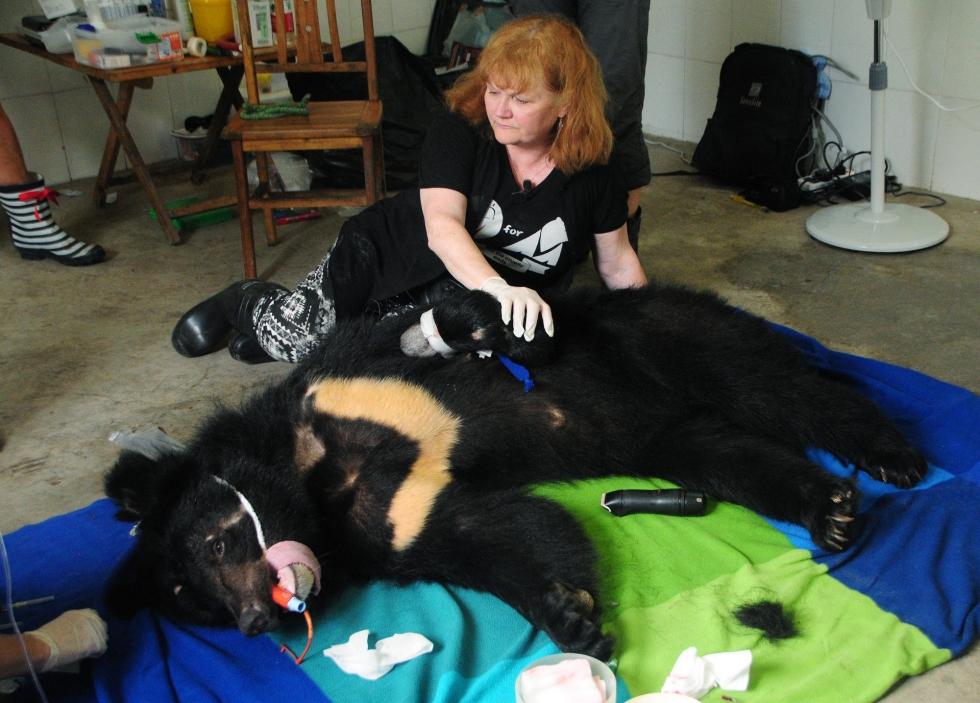 Волонтеры пытаются спасти медведя