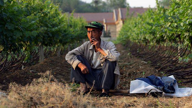 Взлет виноделия произошел так же стремительно, как и рост промышленности. Источник: www.heraldsun.com.au