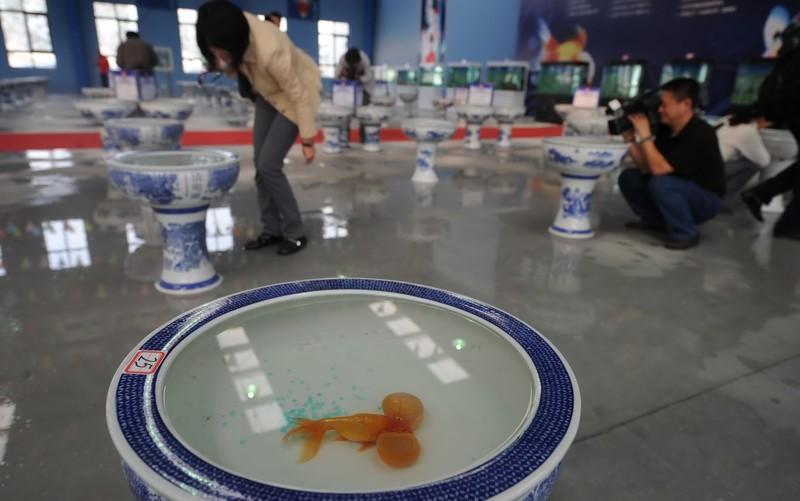 Музей золотых рыбок в Пекине - просто находка для фотографов! Источник: globaltimes.cn