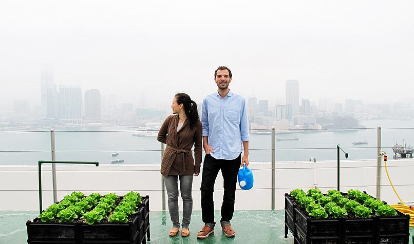 Органическое фермерство в Гонконге крайне популярно. Источник: intheblack.com