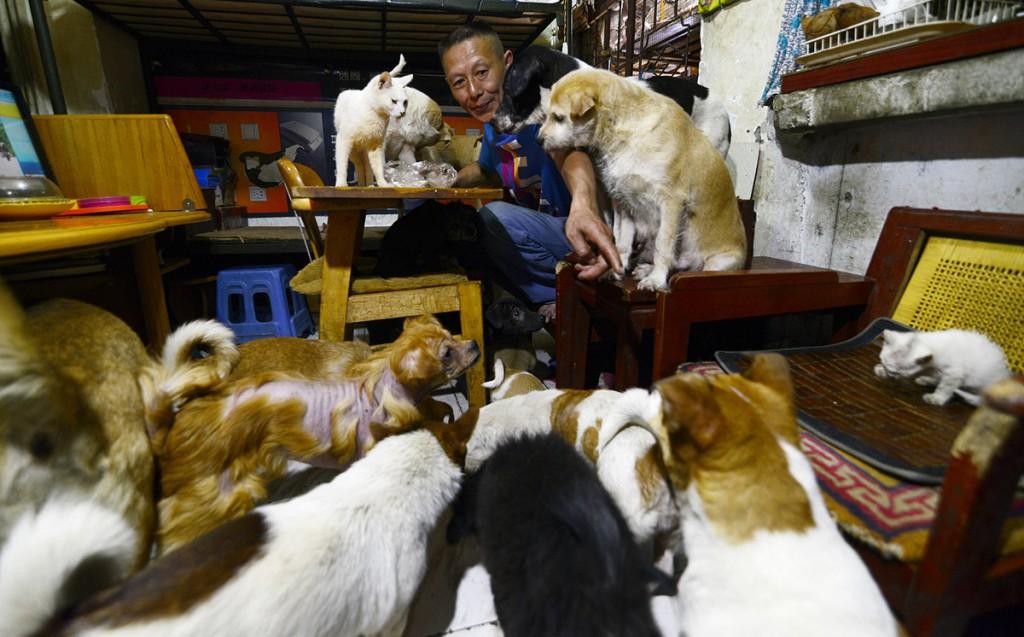 Китаец приютил животных в своей маленькой квартире