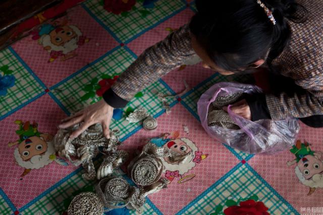 китаянка кормит змей у себя дома