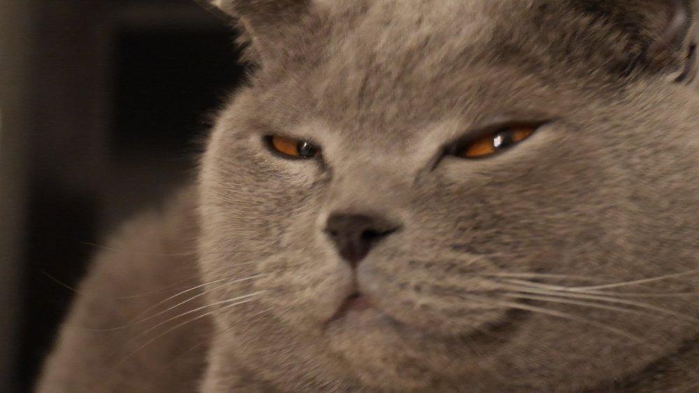 Прямо как этот кот-подозревака - pikabu.ru