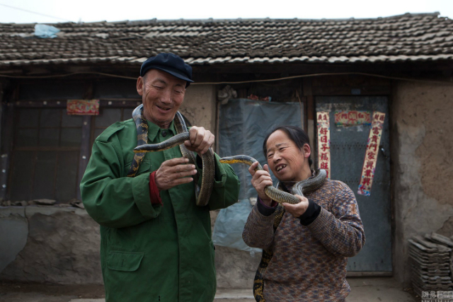 семья китайцев держит змей в руках