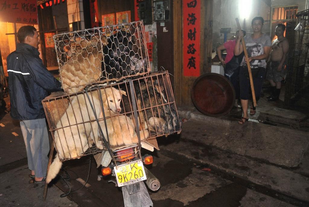 Власти города утверждают, что никакого фестиваля собачьего мяса нет. Источник: www.mirror.co.uk