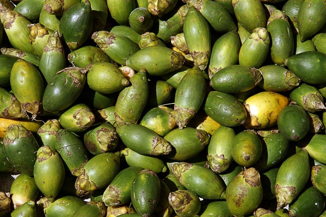 зеленые плоды бетеля