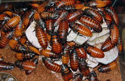 Источник: cockroachcomics.wordpress.com