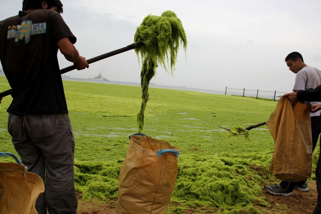 Но водоросли, все же, убирают. Источник: mashable.com