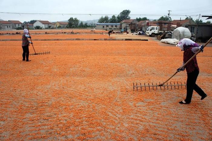 работники сушат креветки