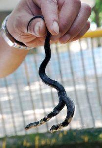 В зоопарке Наньниня к находке отнеслись с интересом. Источник: dailymail.co.uk