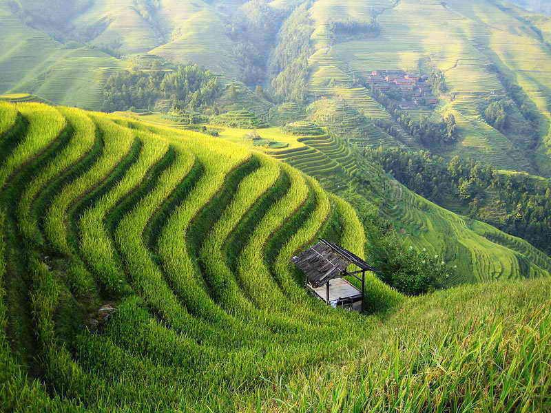 Сельское хозяйство в Китае - как минимум это красиво! Источник: www.ccagr.com