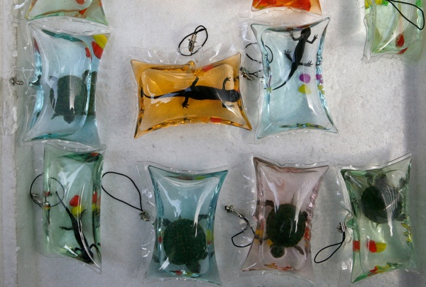 Живые рептилии. Источник: listverse.com