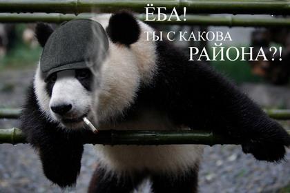 Если бы панды умели говорить... Фото i1.i.ua