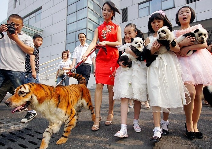 Китайцы и собаки, перекрашенные в тигра и панд. Фото port2all.dp.ua