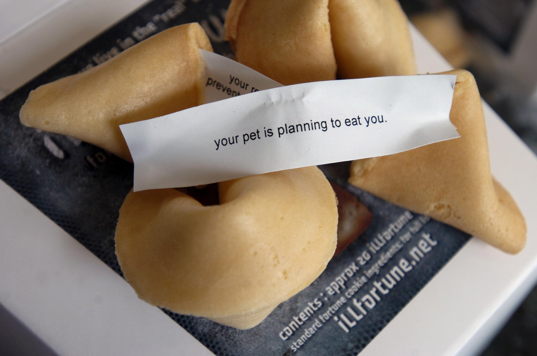 Оригинальное предсказание в печенье из Китая