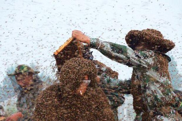Первый в мире китайский мужчина-пчеломатка! Фото: dailystar.co.uk