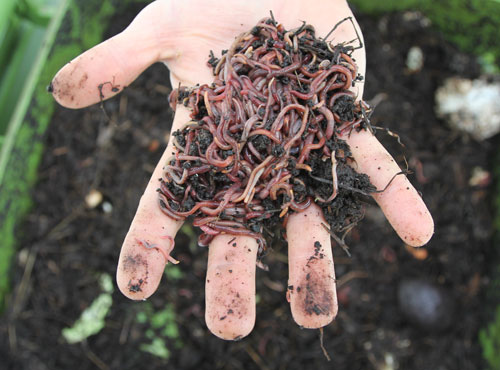 Worms_handful_worms
