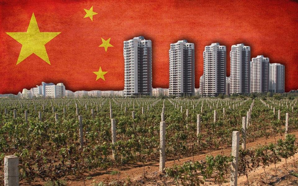 Китайские винные плантации. Фото: wineponder.com