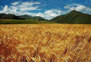 Чарующая местность Синьдуцяо в Китае. Фото: В Китае кого только не встретишь по пути! Фото: adventurecycling.org