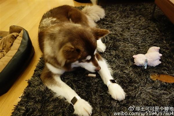 Собачка хоть и не говорящая, но уже с эпплом! Фото: news.mydrivers.com