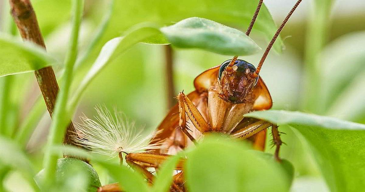 Умная ферма в Сычуане выращивает 6 млрд тараканов в год